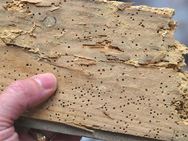 Image result for Woodworm Remedies: Defend Your Timber