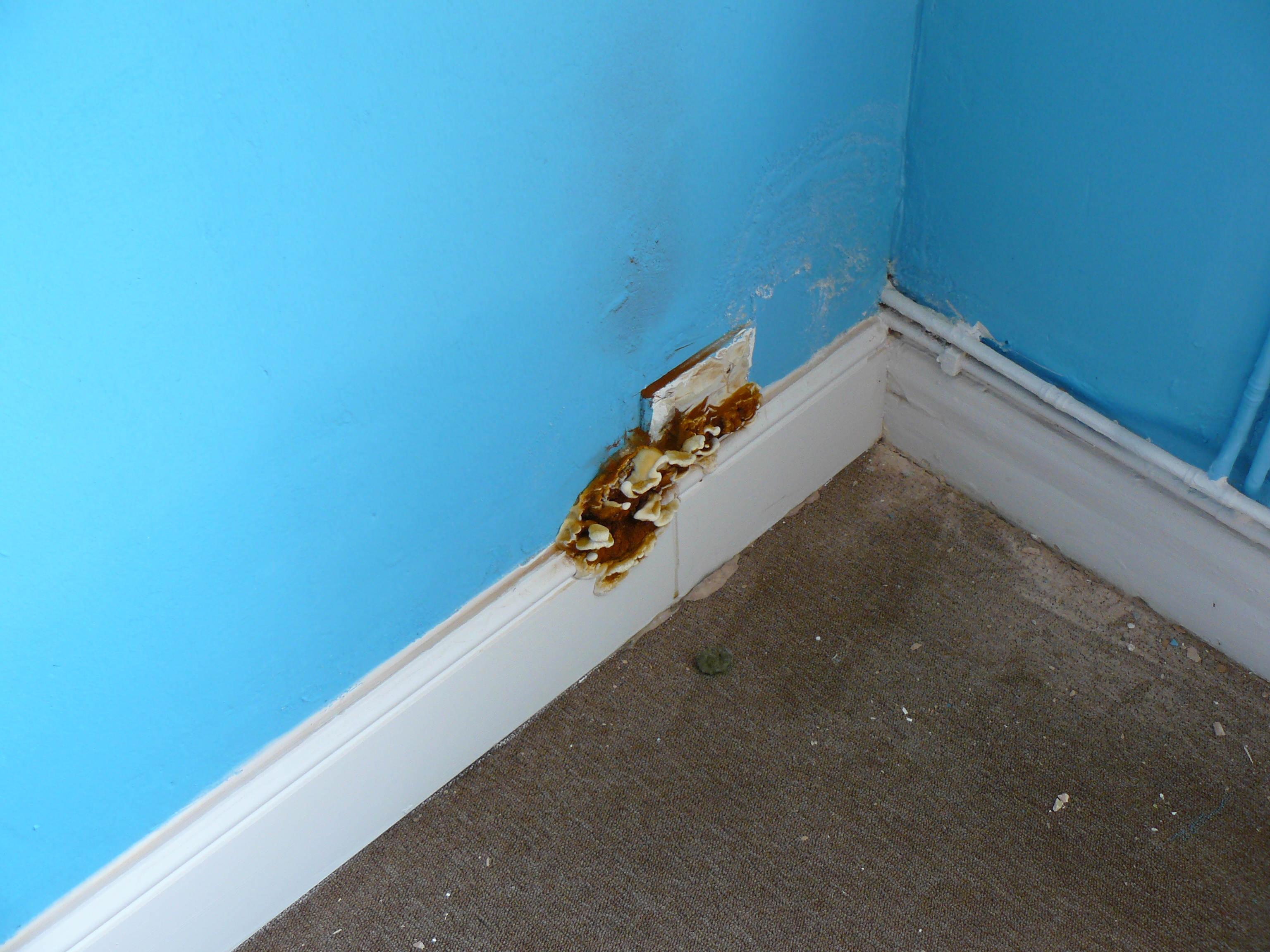 how to stop dry rot from spreading