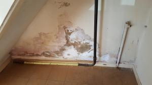 contaminated plaster